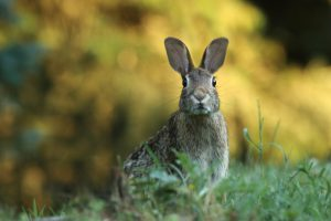 How to Protect Plants from Rabbits The Best Way to Keep Rabbits out of the Garden