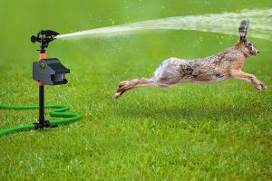 The 2 Best Rabbit Sprinkler Repellent Products: Scare Rabbits Away with Water!