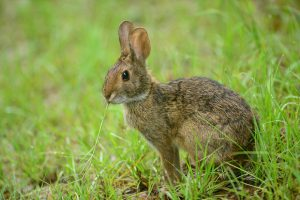 Messina Rabbit Stopper Spray Review A Fantastic Rabbit Deterrent