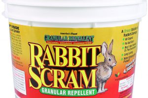 Rabbit Scram Repellent Review: The Best Rabbit Repellent Granules!