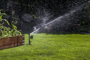 The 2 Best Rabbit Sprinkler Repellent Products: Scare Rabbits Away with Water