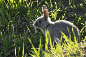 The 5 Best Rabbit Repellent Sprays These Rabbit Deterrent Spray Products are Unbeatable