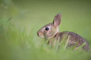 The Best Electronic Rabbit Repellent Devices