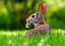 The Best Rabbit Repellent Plants Check Out These Plants That Repel Rabbits