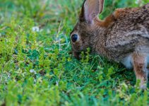 How to Get Rid of Rabbits in Your Yard: The Best Rabbit ...