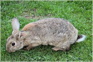 How to Get Rid of Rabbits in Your Garden: The Best Rabbit Repellent Gardens!