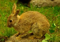 How to Get Rid of Rabbits in Your Yard The Best Rabbit Deterrent Products