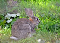 How to Keep Rabbits Away from the Garden Stop Rabbits from Eating Plants