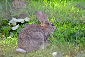 How to keep rabbits away from the garden stop rabbits - How to deter rabbits from garden ...