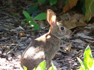 How to Keep Rabbits Out of the Vegetable Garden Tips for Rabbit Deterrent Gardens