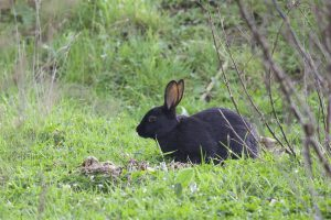The Best Rabbit Repellent Reviews Prevent Rabbits from Eating Plants